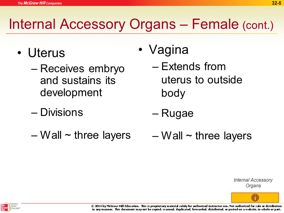32-4 Internal Accessory Organs – Female Fallopian tube – oviduct –Infundibulum and fimbriae Fringed, expanded end of fallopian tube near ovary Functio