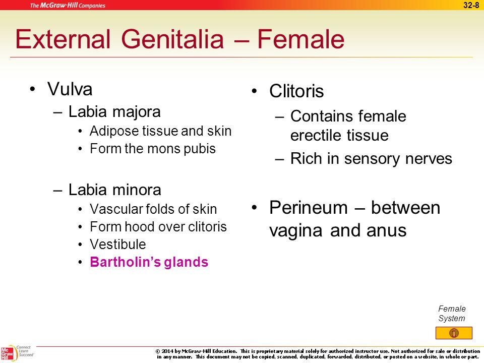 32-7 External Accessory Organs - Female Mammary glands –Secretion of milk –Structures Nipple Areola Alveolar glands