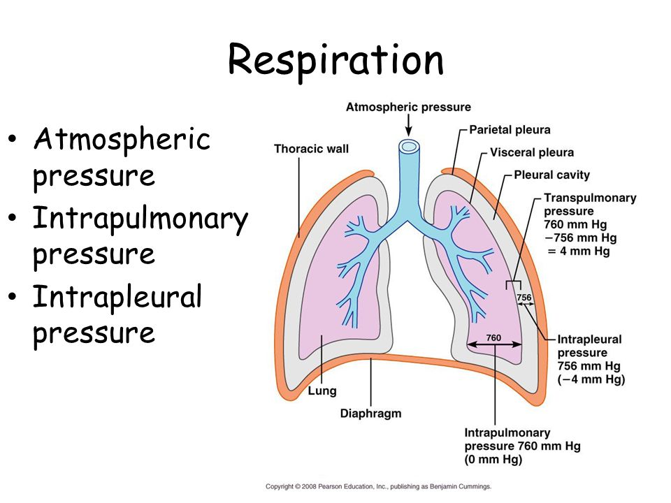 Respiration Atmospheric pressure Intrapulmonary pressure Intrapleural pressure