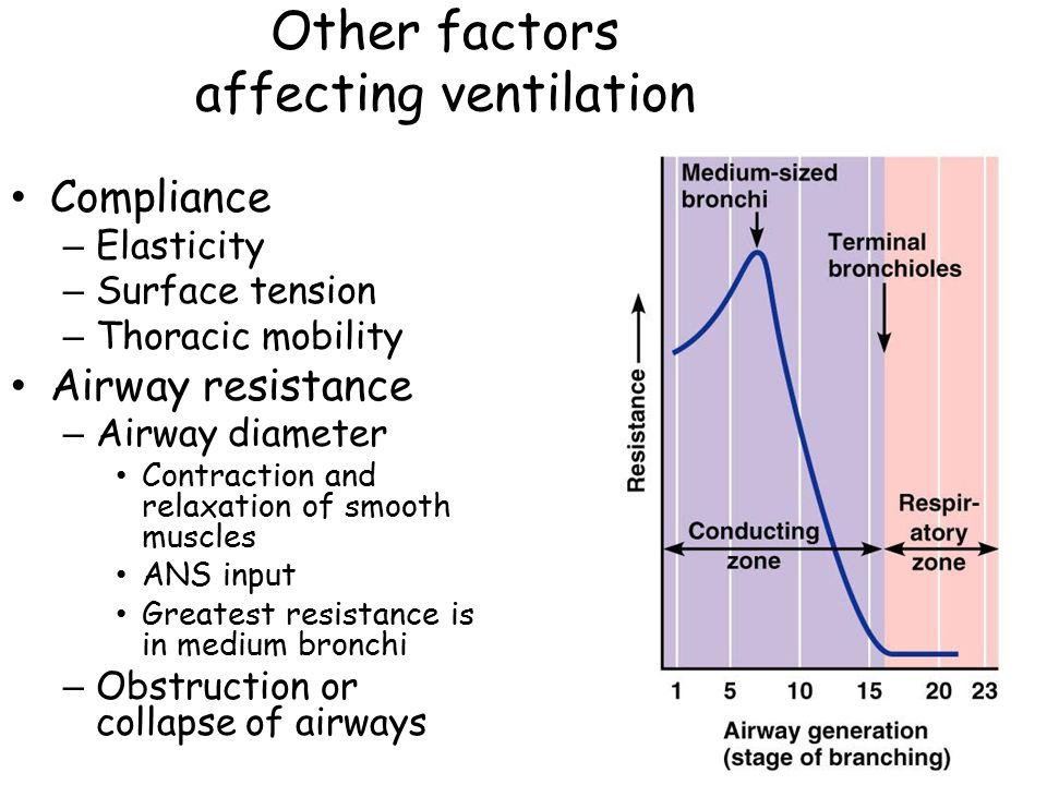 Other factors affecting ventilation Compliance – Elasticity – Surface tension – Thoracic mobility Airway resistance – Airway diameter Contraction and relaxation of smooth muscles ANS input Greatest resistance is in medium bronchi – Obstruction or collapse of airways