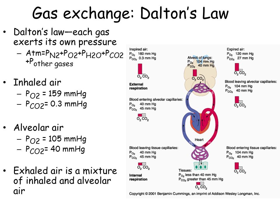 Gas exchange: Dalton's Law Dalton's law—each gas exerts its own pressure – Atm=P N2 +P O2 +P H2O +P CO2 +P other gases Inhaled air – P O2 = 159 mmHg –