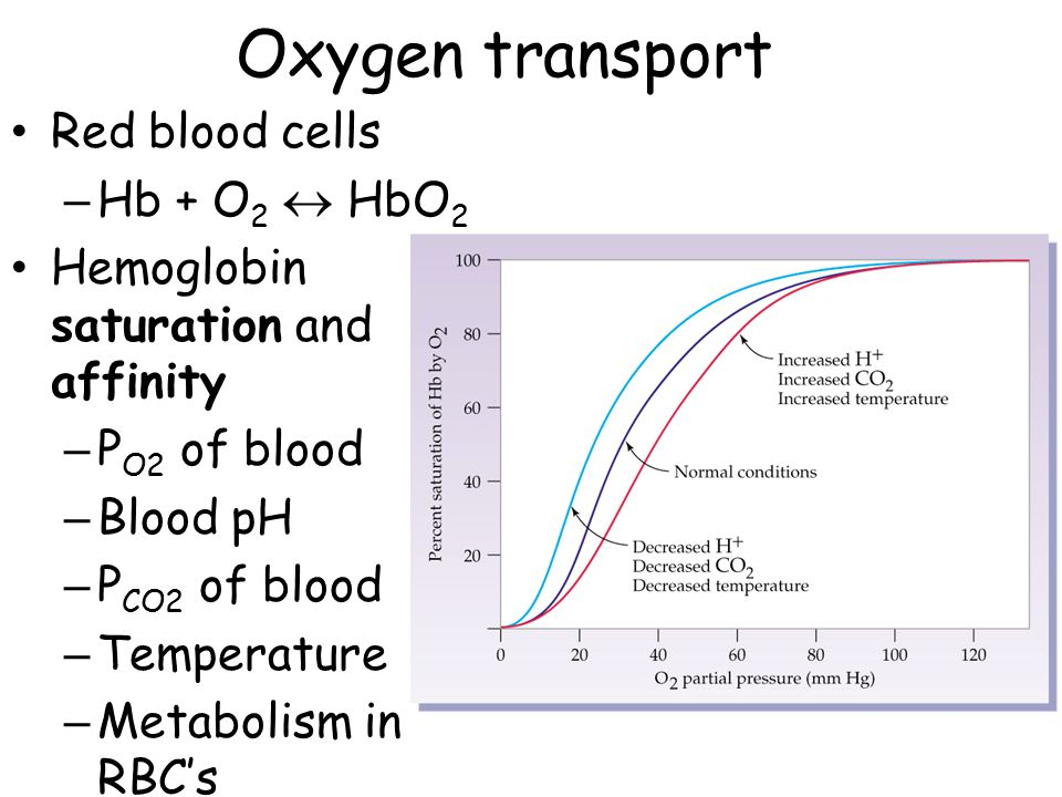 Oxygen transport Red blood cells – Hb + O 2  HbO 2 Hemoglobin saturation and affinity – P O2 of blood – Blood pH – P CO2 of blood – Temperature – Met