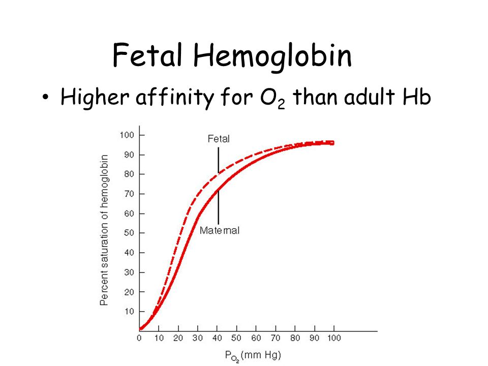 Fetal Hemoglobin Higher affinity for O 2 than adult Hb