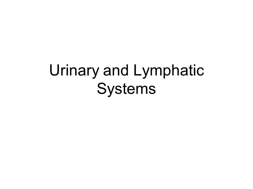 Urinary and Lymphatic Systems
