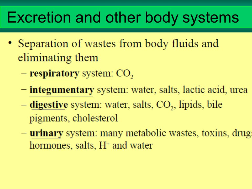 Excretion and other body systems