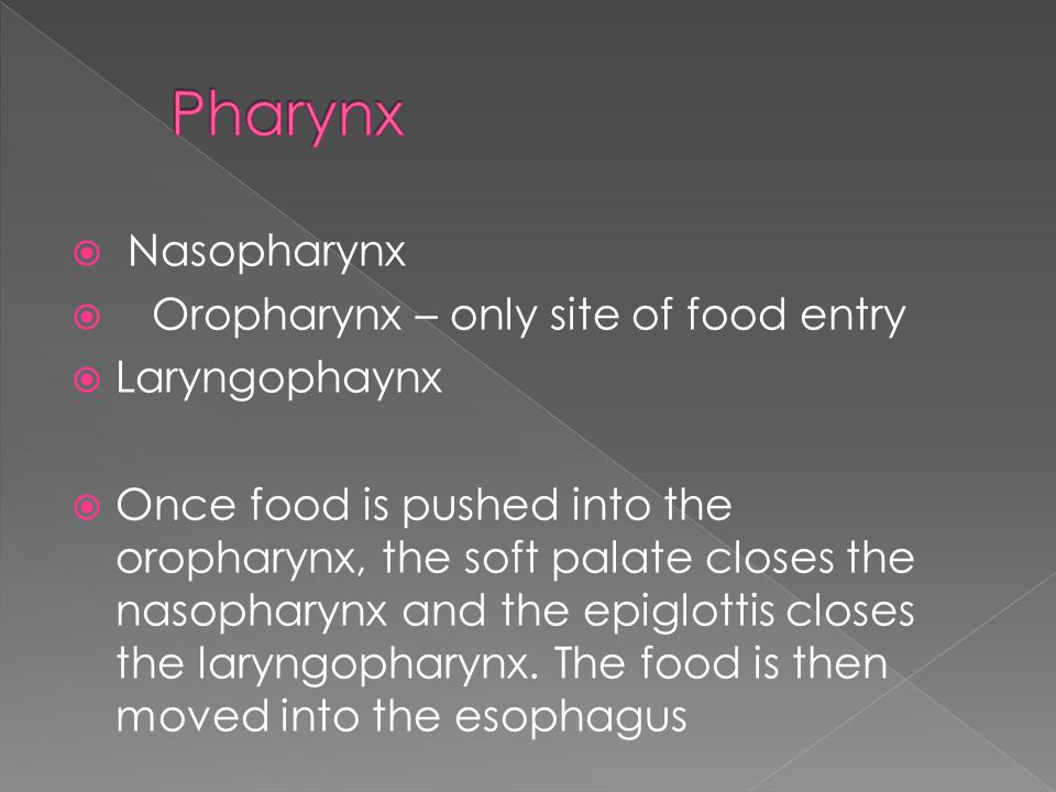  Nasopharynx  Oropharynx – only site of food entry  Laryngophaynx  Once food is pushed into the oropharynx, the soft palate closes the nasopharynx and the epiglottis closes the laryngopharynx.