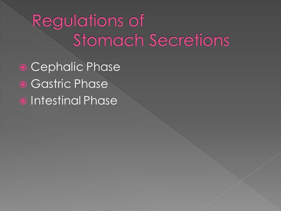  Cephalic Phase  Gastric Phase  Intestinal Phase