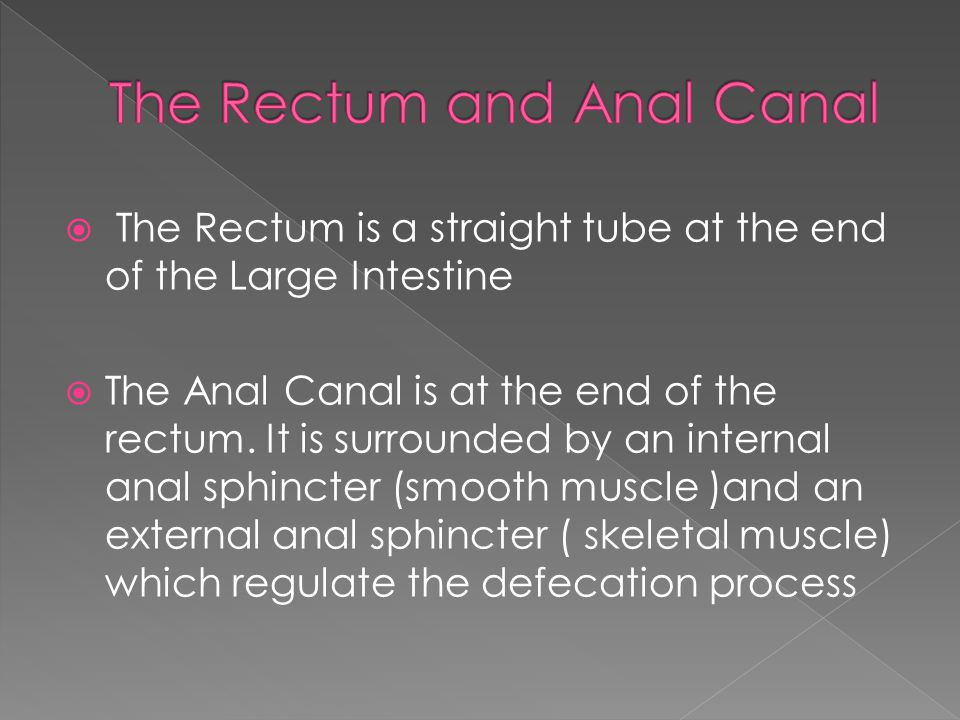  The Rectum is a straight tube at the end of the Large Intestine  The Anal Canal is at the end of the rectum.