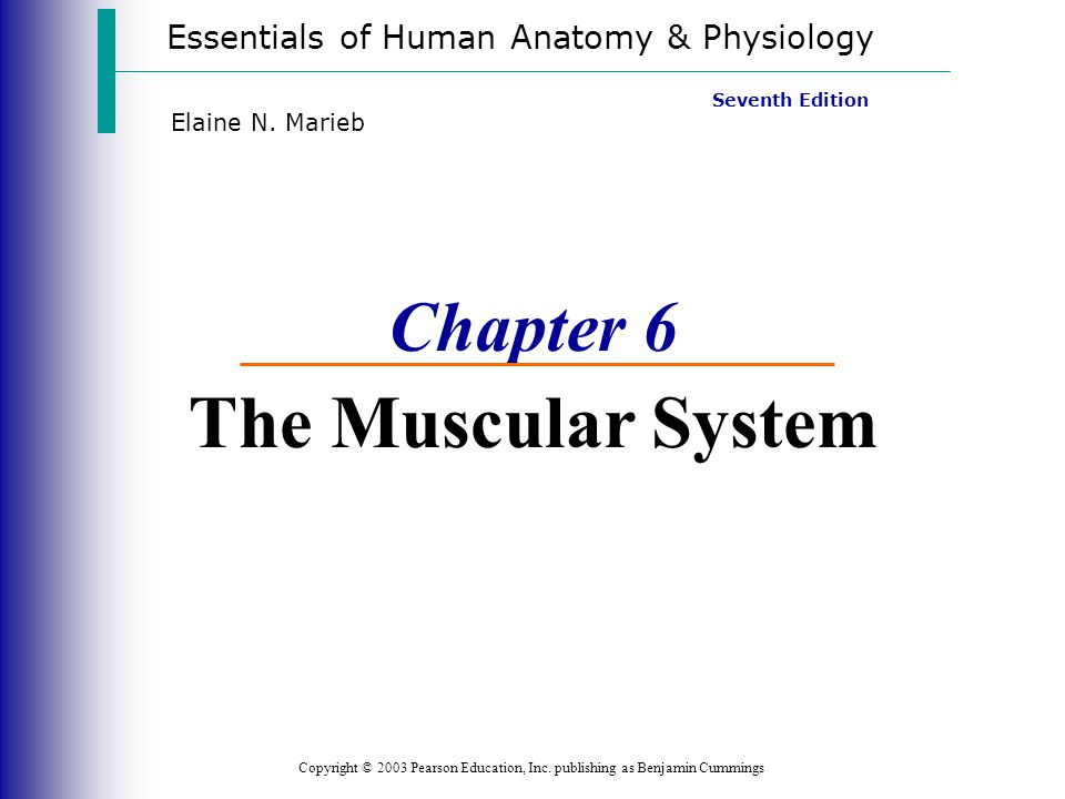Essentials of Human Anatomy & Physiology Copyright © 2003 Pearson Education, Inc. publishing as Benjamin Cummings Seventh Edition Elaine N. Marieb Cha