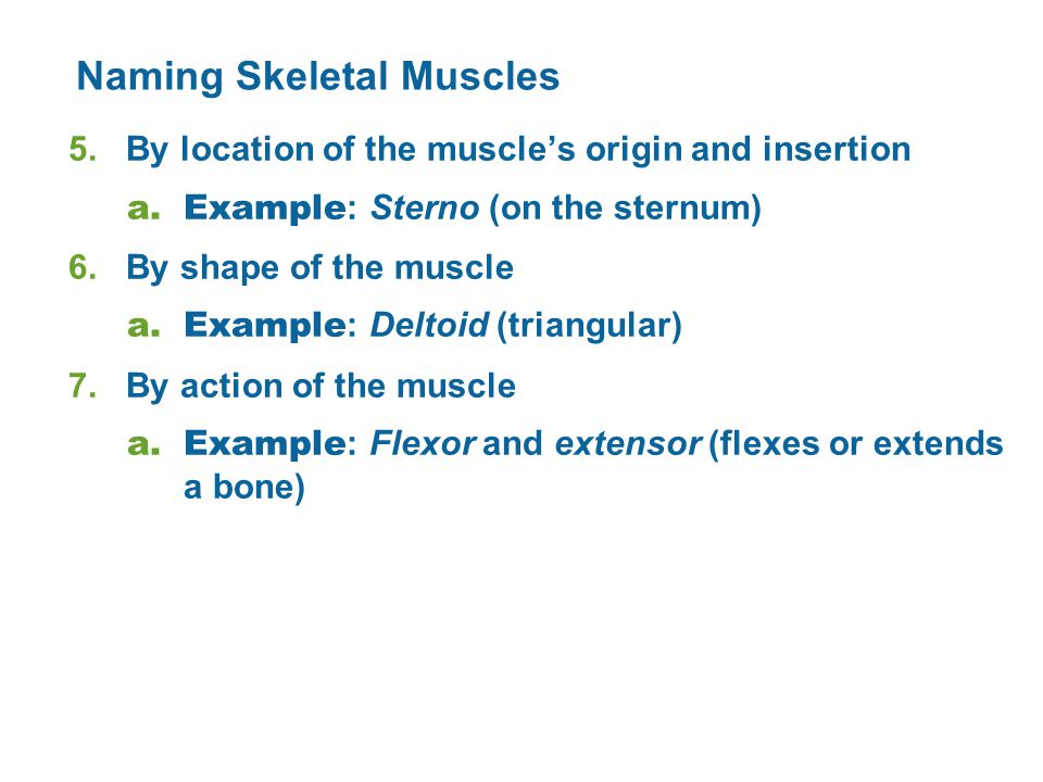 Naming Skeletal Muscles 5.By location of the muscle's origin and insertion a.Example : Sterno (on the sternum) 6.By shape of the muscle a.Example : Deltoid (triangular) 7.By action of the muscle a.Example : Flexor and extensor (flexes or extends a bone)
