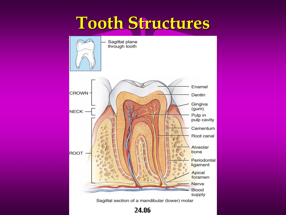 Tooth Structures