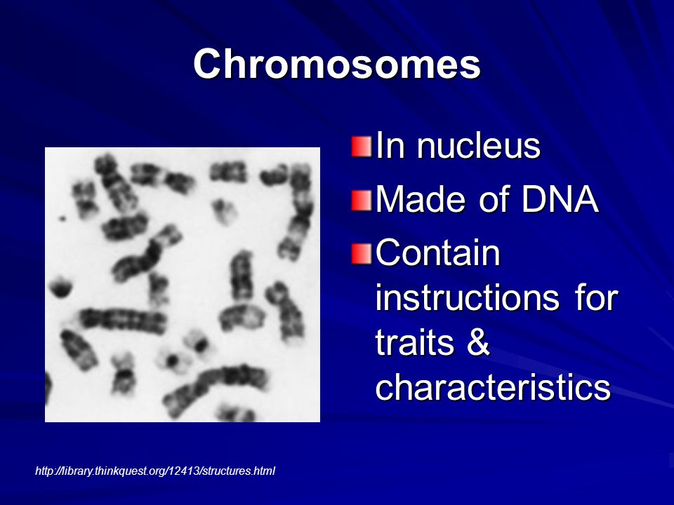 Chromosomes In nucleus Made of DNA Contain instructions for traits & characteristics http://library.thinkquest.org/12413/structures.html