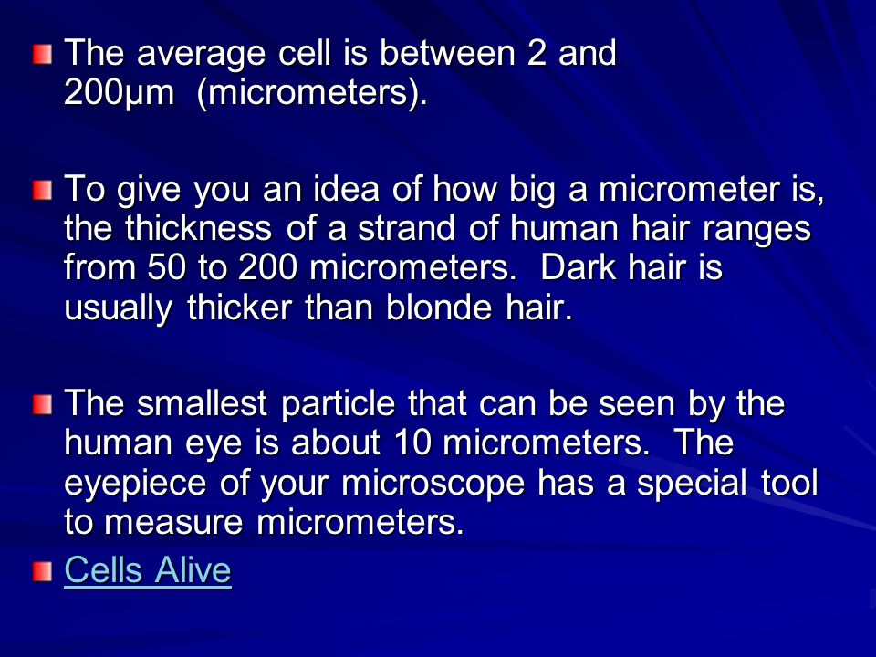 The average cell is between 2 and 200µm (micrometers). To give you an idea of how big a micrometer is, the thickness of a strand of human hair ranges