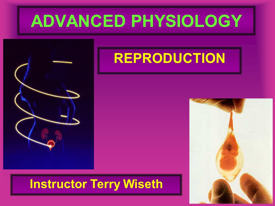ADVANCED PHYSIOLOGY REPRODUCTION Instructor Terry Wiseth