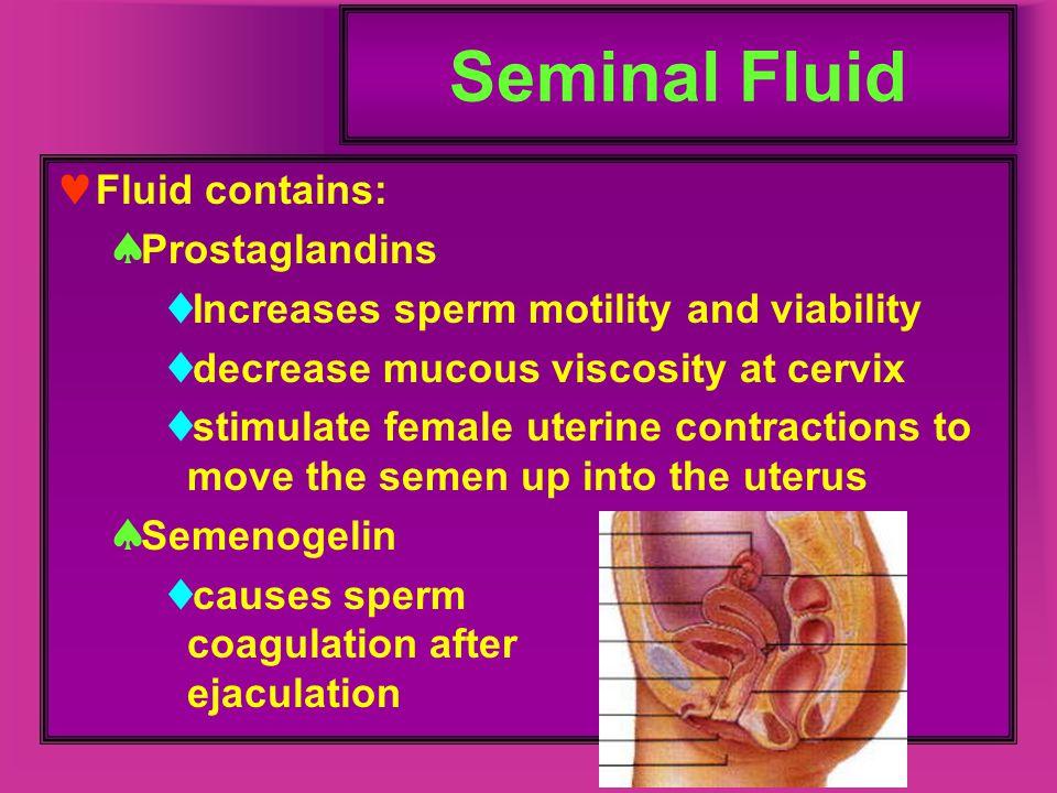 Seminal Fluid Fluid contains:  Prostaglandins  Increases sperm motility and viability  decrease mucous viscosity at cervix  stimulate female uteri