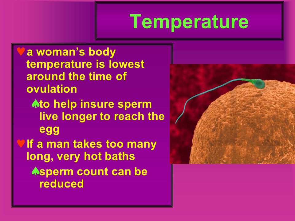 Uterus thick, muscular walls The lining of the uterus is called the endometrium