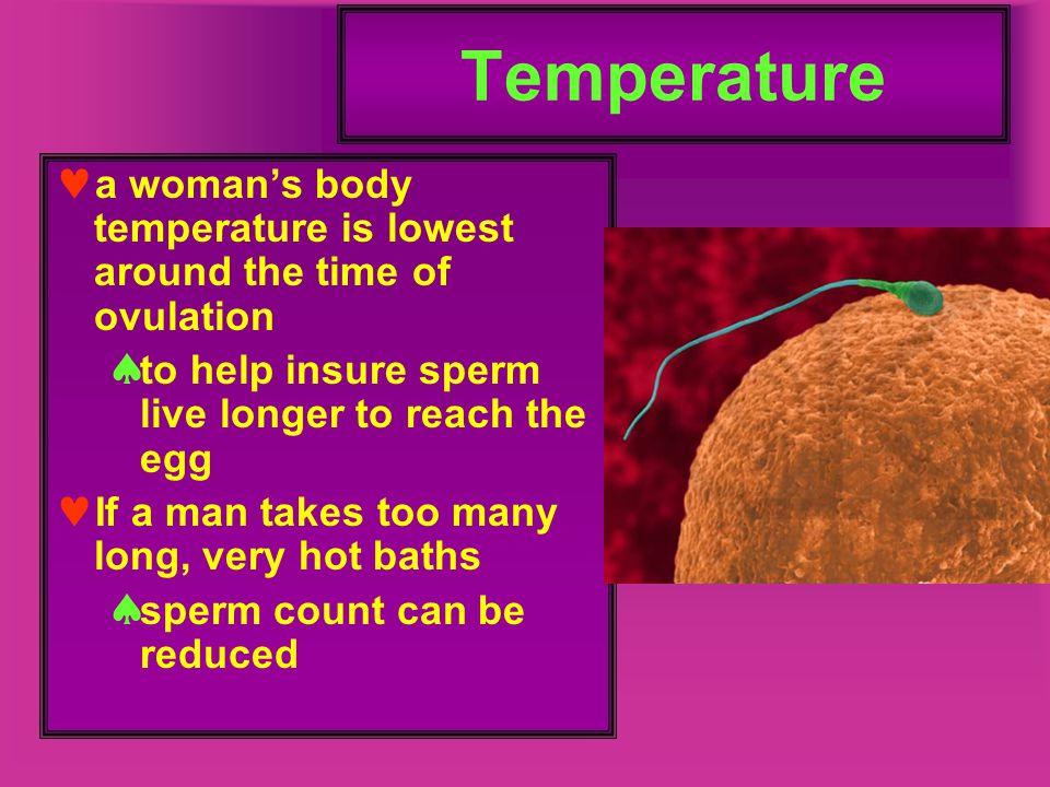 Myometrium Contains arteries with radial branches to endometrium