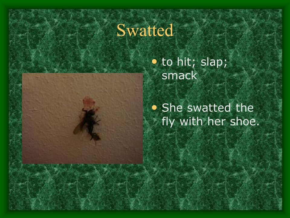 Swatted to hit; slap; smack She swatted the fly with her shoe.