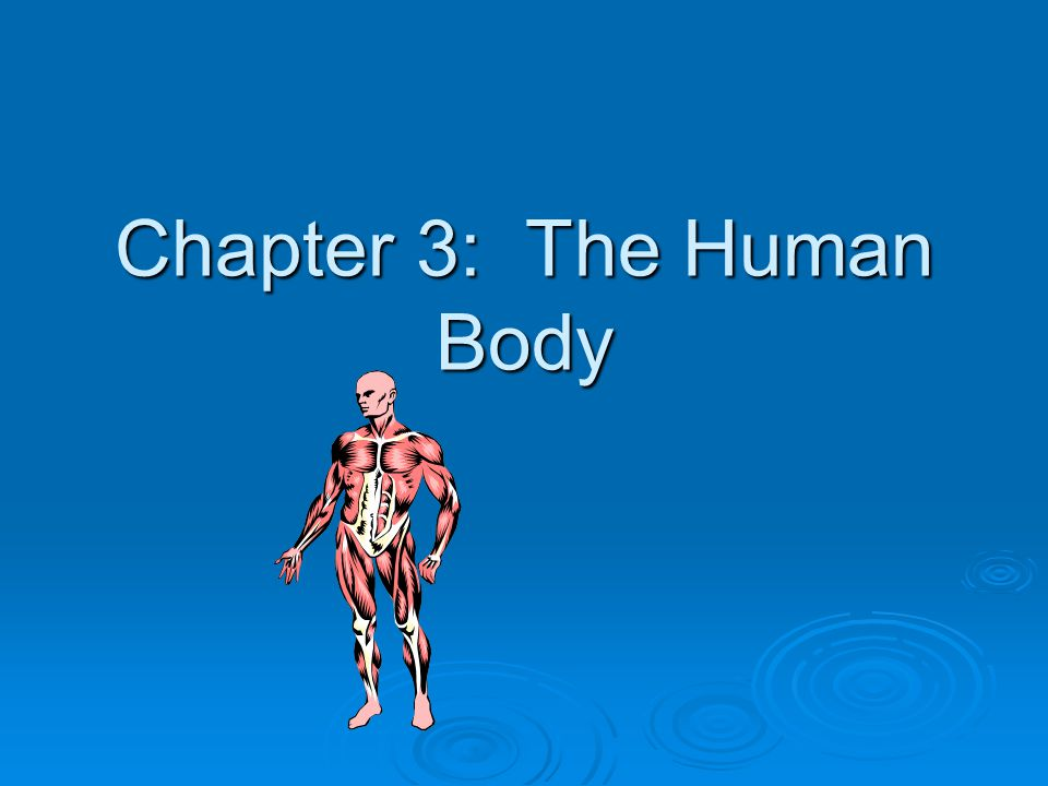 Chapter 3: The Human Body