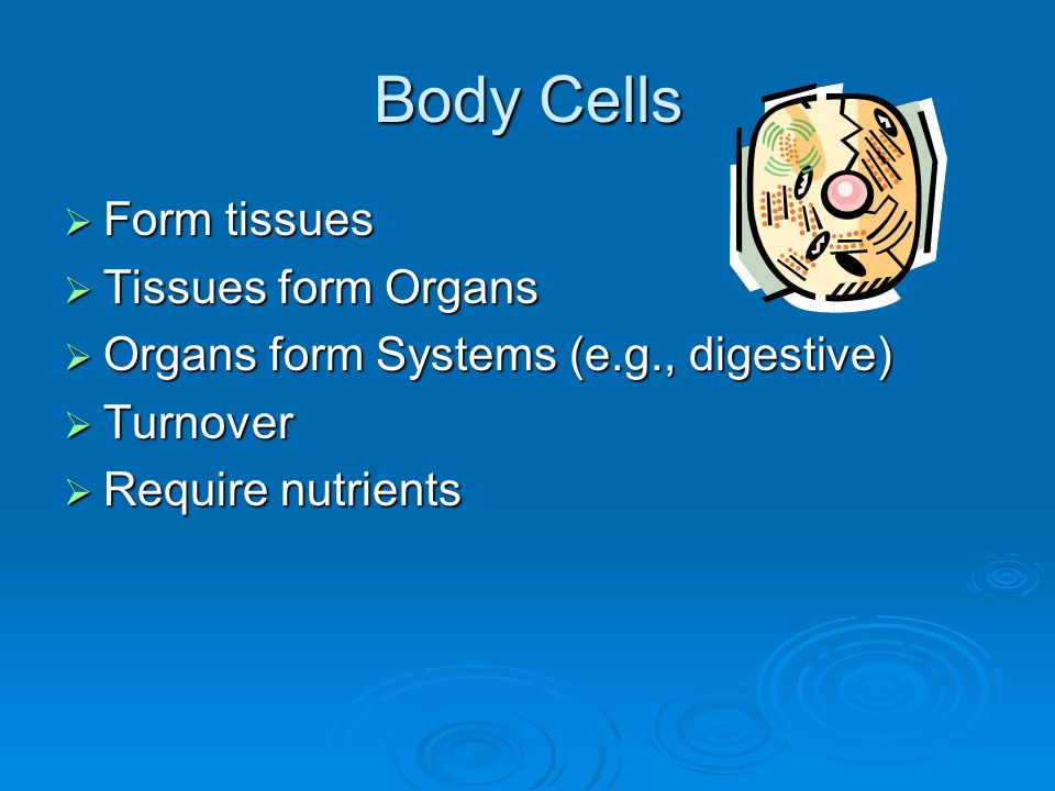 Body Cells  Form tissues  Tissues form Organs  Organs form Systems (e.g., digestive)  Turnover  Require nutrients