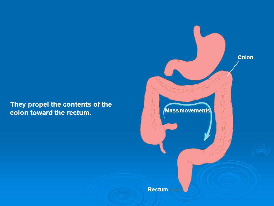 They propel the contents of the colon toward the rectum. Mass movements Colon Rectum