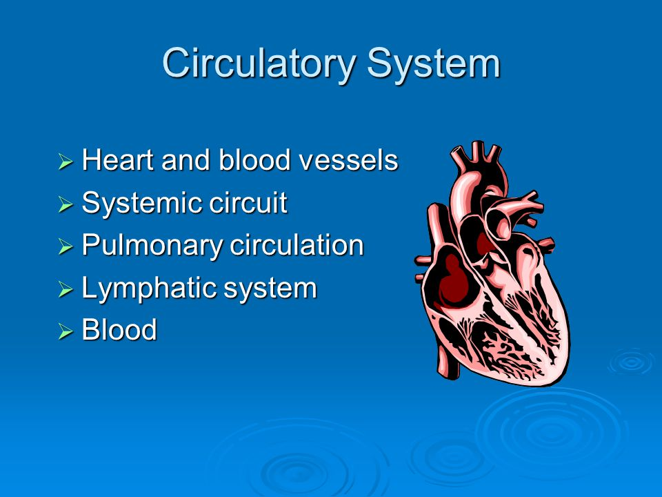 Circulatory System  Heart and blood vessels  Systemic circuit  Pulmonary circulation  Lymphatic system  Blood