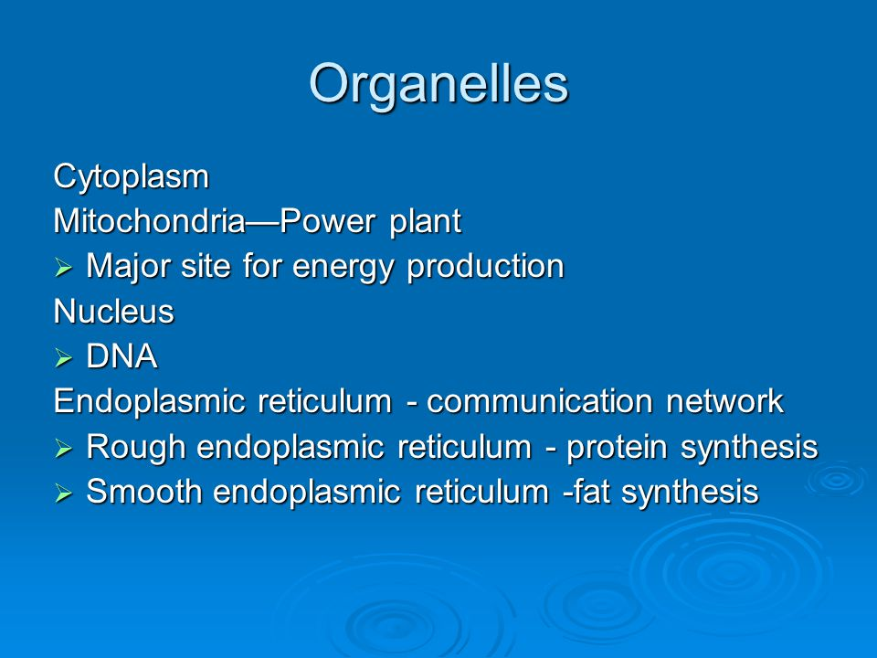 Organelles Cytoplasm Mitochondria—Power plant  Major site for energy production Nucleus  DNA Endoplasmic reticulum - communication network  Rough endoplasmic reticulum - protein synthesis  Smooth endoplasmic reticulum -fat synthesis