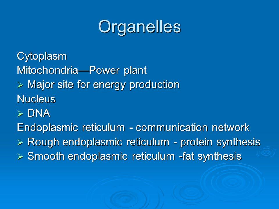 Organelles Cytoplasm Mitochondria—Power plant  Major site for energy production Nucleus  DNA Endoplasmic reticulum - communication network  Rough e