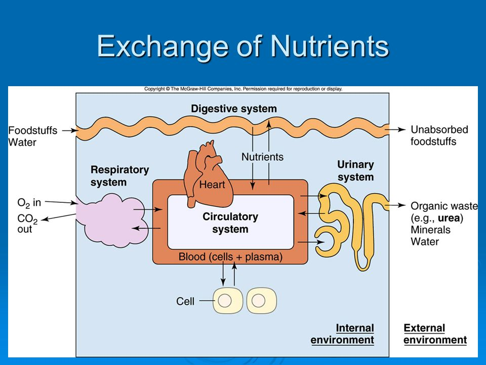 Exchange of Nutrients  Insert Fig. 3-4