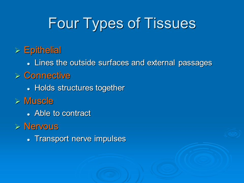 Four Types of Tissues  Epithelial Lines the outside surfaces and external passages Lines the outside surfaces and external passages  Connective Holds structures together Holds structures together  Muscle Able to contract Able to contract  Nervous Transport nerve impulses Transport nerve impulses