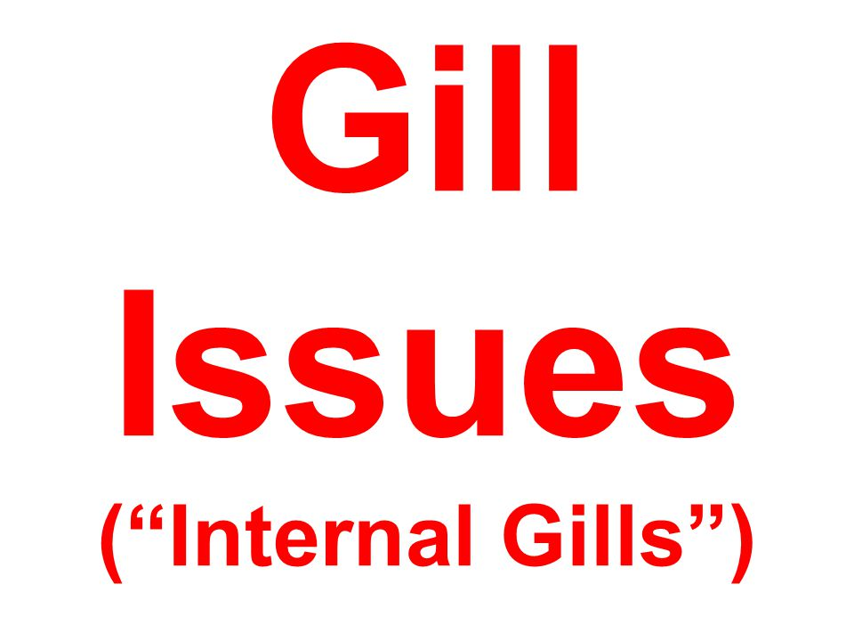 "Gill Issues (""Internal Gills"")"