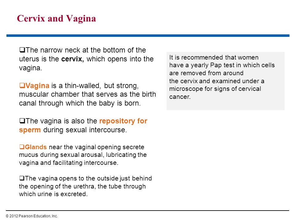 Cervix and Vagina © 2012 Pearson Education, Inc. It is recommended that women have a yearly Pap test in which cells are removed from around the cervix