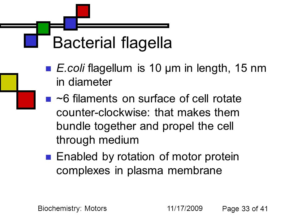 11/17/2009Biochemistry: Motors Page 33 of 41 Bacterial flagella E.coli flagellum is 10 µm in length, 15 nm in diameter ~6 filaments on surface of cell rotate counter-clockwise: that makes them bundle together and propel the cell through medium Enabled by rotation of motor protein complexes in plasma membrane