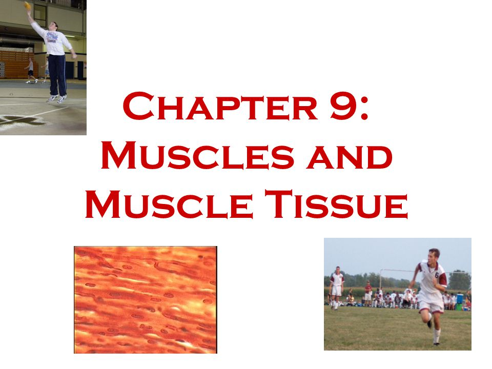 Chapter 9: Muscles and Muscle Tissue