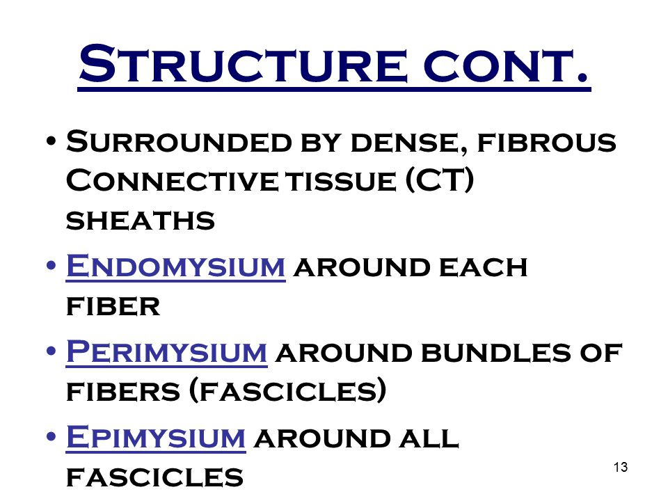 13 Structure cont. Surrounded by dense, fibrous Connective tissue (CT) sheaths Endomysium around each fiber Perimysium around bundles of fibers (fasci