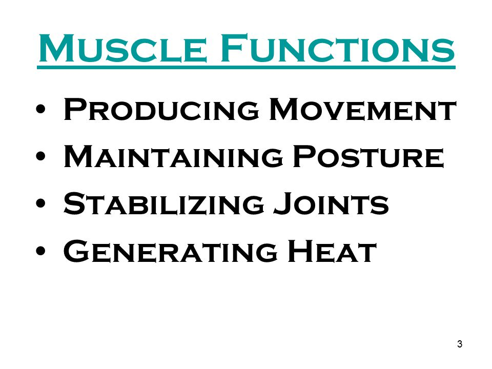 4 3 Types of Muscle Skeletal Muscle Cardiac Muscle Smooth Muscle