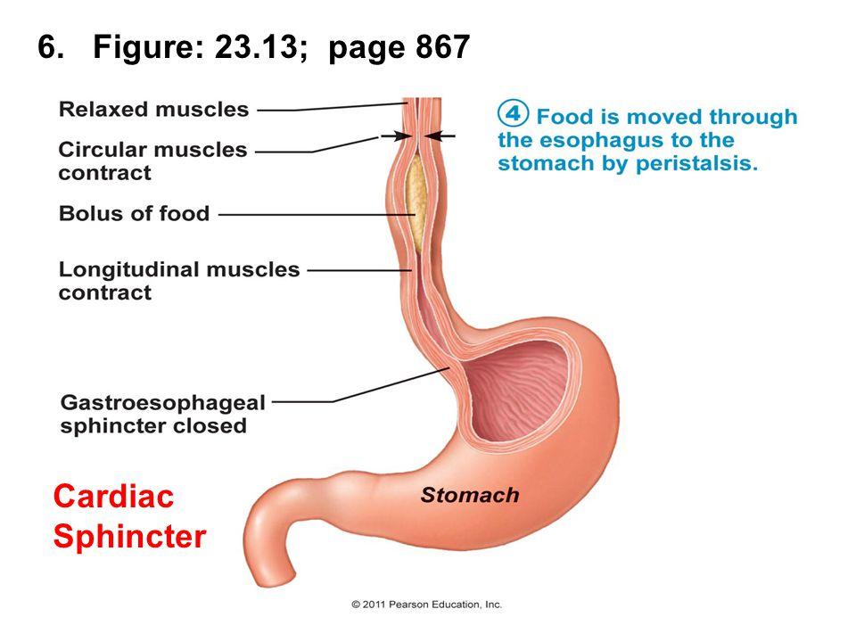 27. Figure 23.24; pg. 882