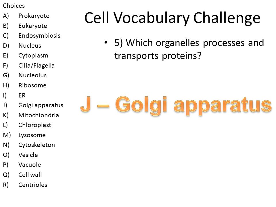 Cell Vocabulary Challenge 4) Which organelles beat back and forth to propel cells.