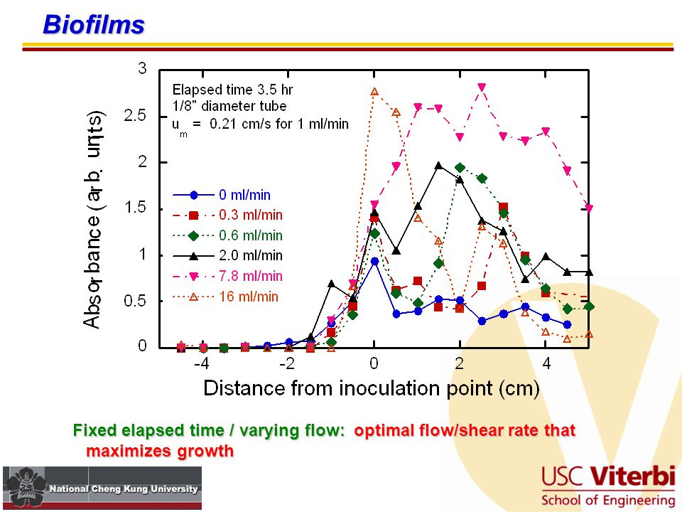 Biofilms Fixed flow / varying elapsed time: more time, more growth, but maybe some sloughing at long times