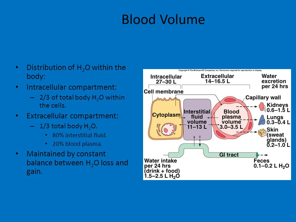 Blood Volume Distribution of H 2 O within the body: Intracellular compartment: – 2/3 of total body H 2 O within the cells.