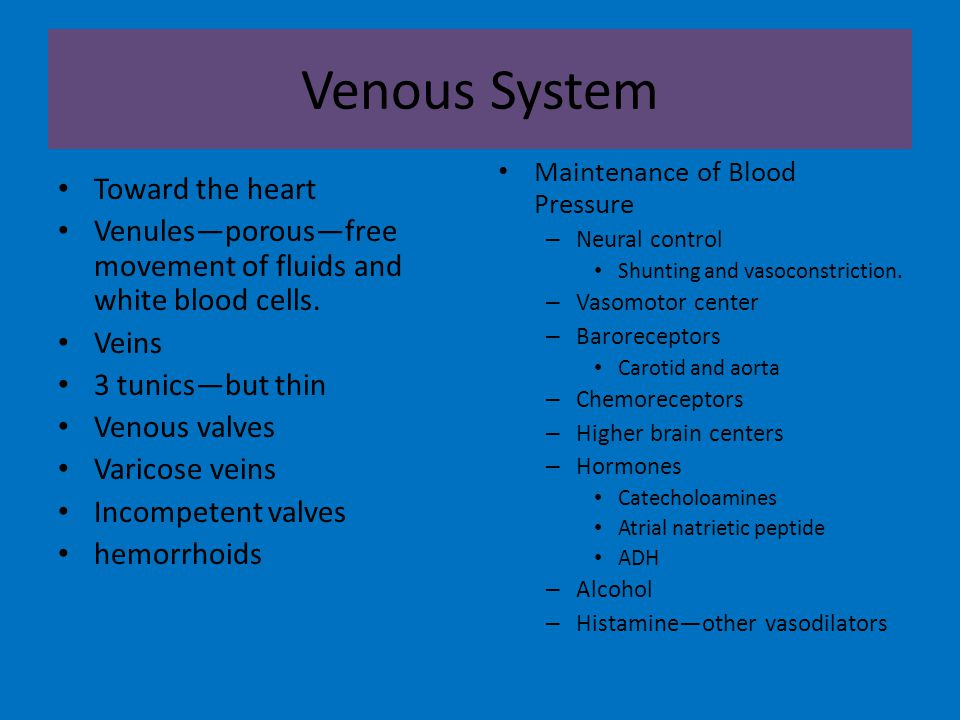 Venous System Toward the heart Venules—porous—free movement of fluids and white blood cells.
