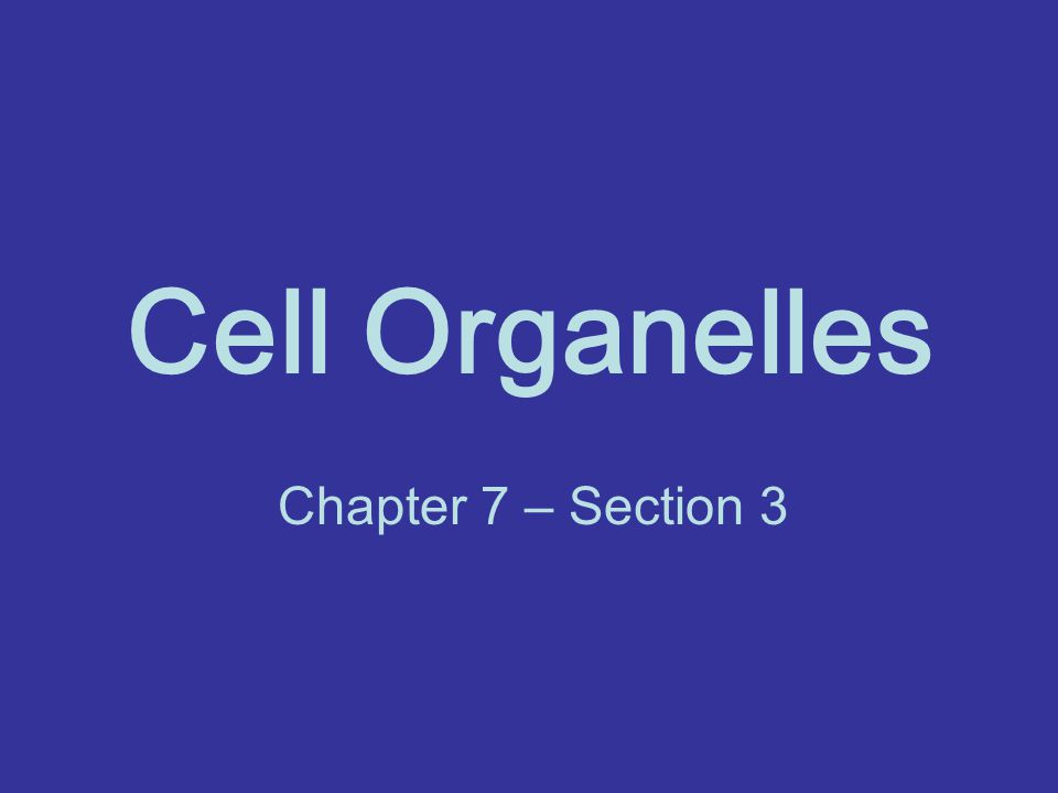 Cell Organelles Chapter 7 – Section 3