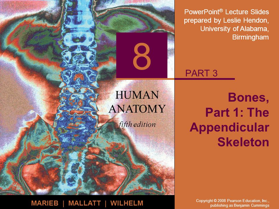 PowerPoint ® Lecture Slides prepared by Leslie Hendon, University of Alabama, Birmingham HUMAN ANATOMY fifth edition MARIEB | MALLATT | WILHELM 8 Copyright © 2008 Pearson Education, Inc., publishing as Benjamin Cummings Bones, Part 1: The Appendicular Skeleton PART 3