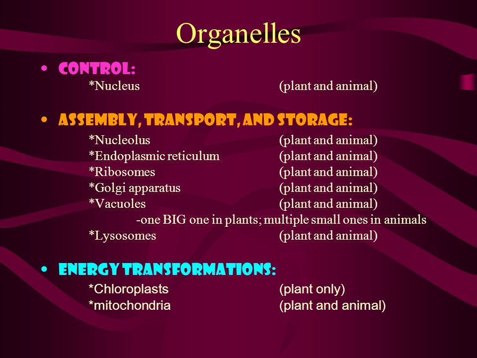 Organelles Control: *Nucleus (plant and animal) Assembly, Transport, and Storage: *Nucleolus(plant and animal) *Endoplasmic reticulum (plant and animal) *Ribosomes(plant and animal) *Golgi apparatus (plant and animal) *Vacuoles (plant and animal) -one BIG one in plants; multiple small ones in animals *Lysosomes(plant and animal) Energy transformations: *Chloroplasts(plant only) *mitochondria (plant and animal)