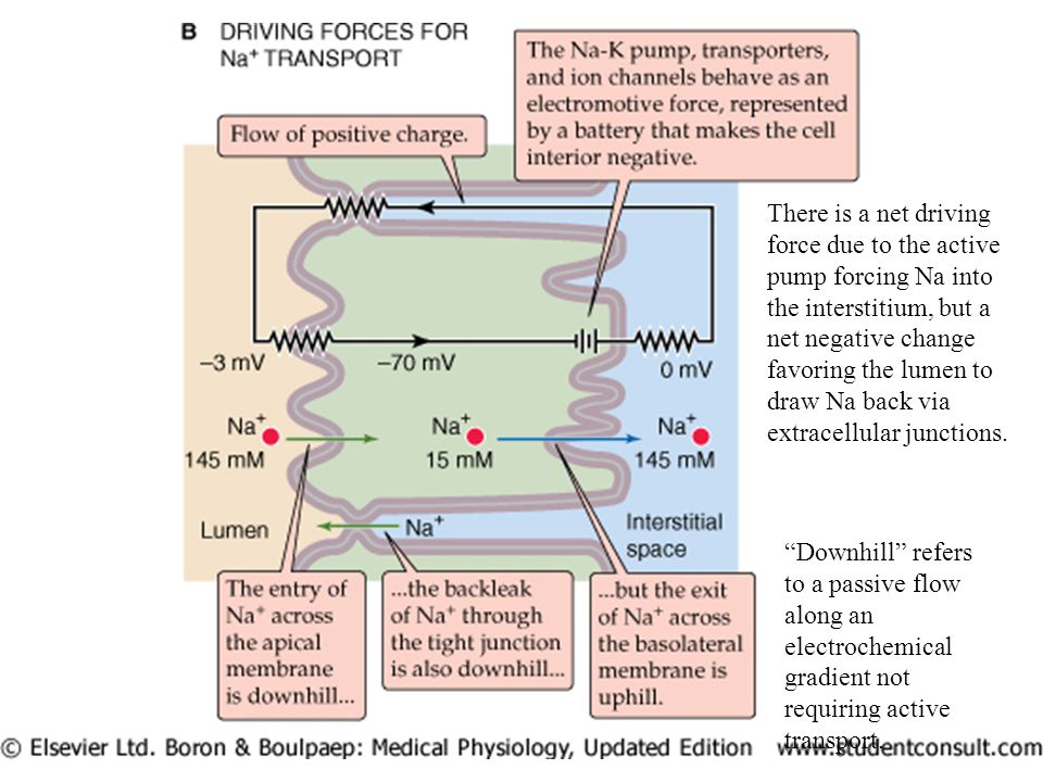 Downhill refers to a passive flow along an electrochemical gradient not requiring active transport.