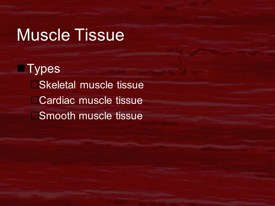 Muscle Tissue Types  Skeletal muscle tissue  Cardiac muscle tissue  Smooth muscle tissue