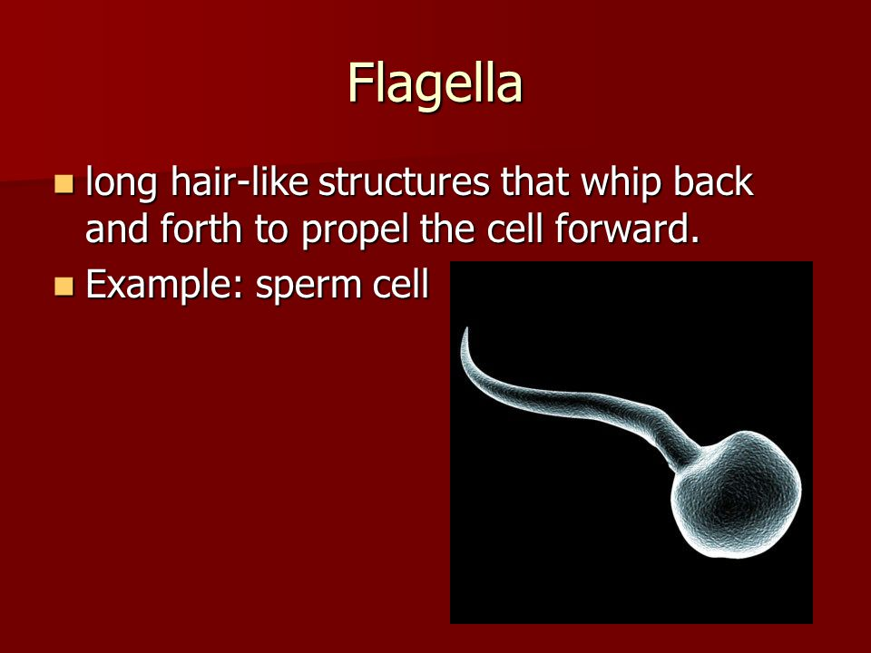 Flagella long hair-like structures that whip back and forth to propel the cell forward.