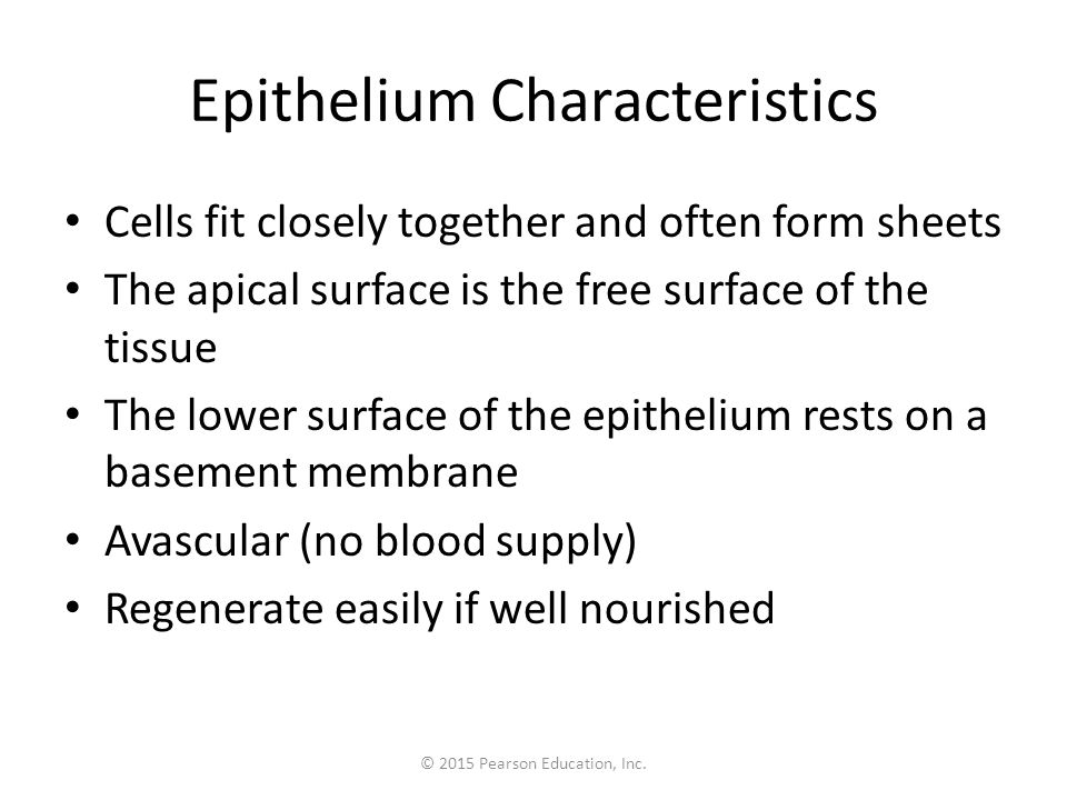 Figure 3.17a Classification and functions of epithelia.
