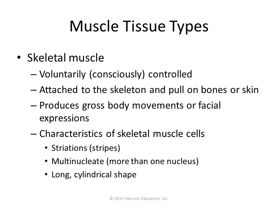 © 2015 Pearson Education, Inc. Muscle Tissue Types Skeletal muscle – Voluntarily (consciously) controlled – Attached to the skeleton and pull on bones