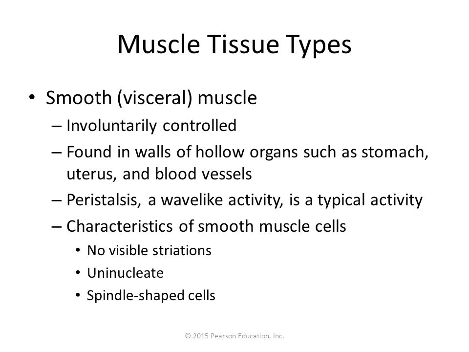 © 2015 Pearson Education, Inc. Muscle Tissue Types Smooth (visceral) muscle – Involuntarily controlled – Found in walls of hollow organs such as stoma